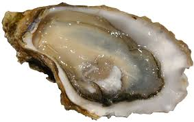 Oyster raw